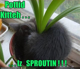 funny-pictures-your-cat-plant-is-sprouting