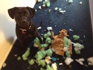 Lt. Dan, indestructible dog toys