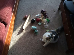 stuff you find under the couch, dog toys under the couch, where do all the dog toys go