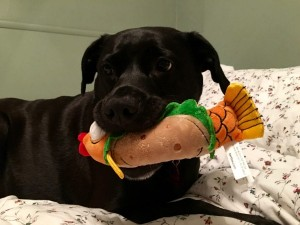 BarkBox dog toy