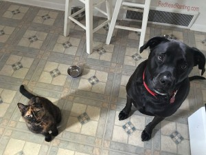 dog and cat begging for food