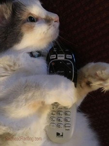 white fluffy cat watching TV holding remote
