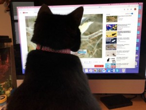 videos cat love to watch, videos for cats to watch