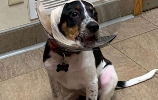 cone of shame on a puppy
