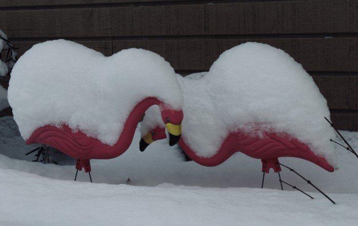 Pink plastic flamingos with snow on them